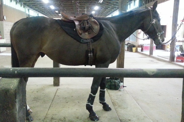 SHOCK-ABSORBING Eventing Saddle Pad